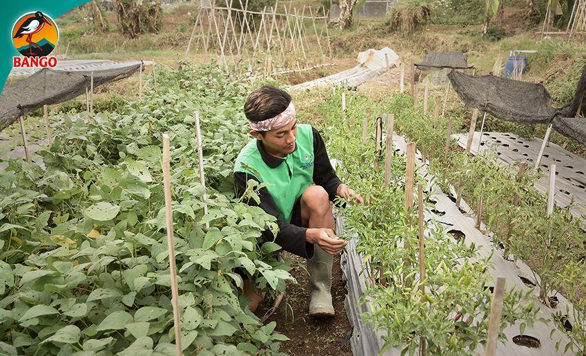 Petani Muda Bango di The Learning Farm