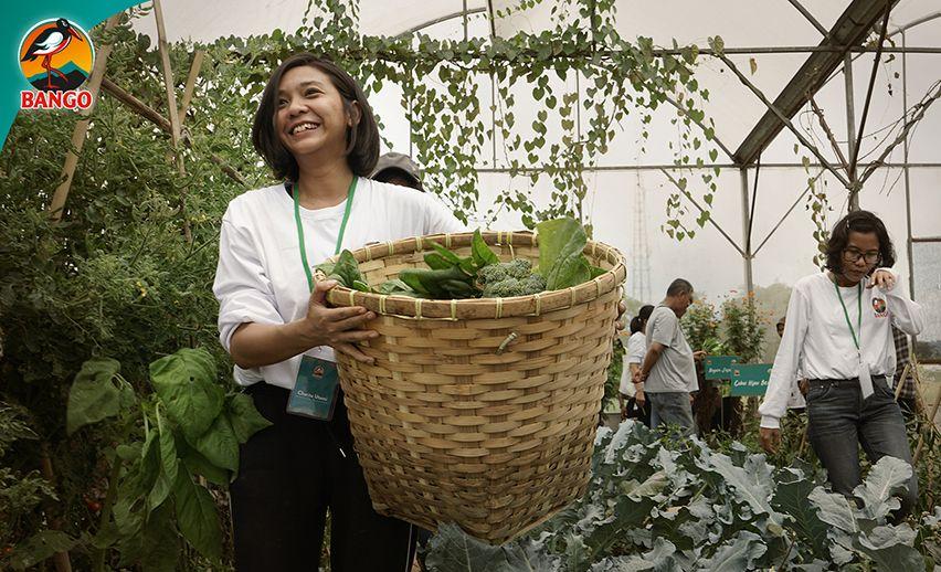 belajar menanam serta cara memanen sayuran dengan baik